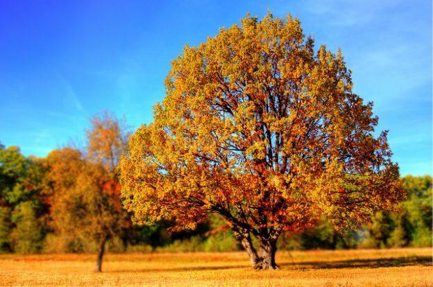 Осень_дерево